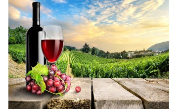 Vinul moldovenesc devine tot mai apreciat la nivel international